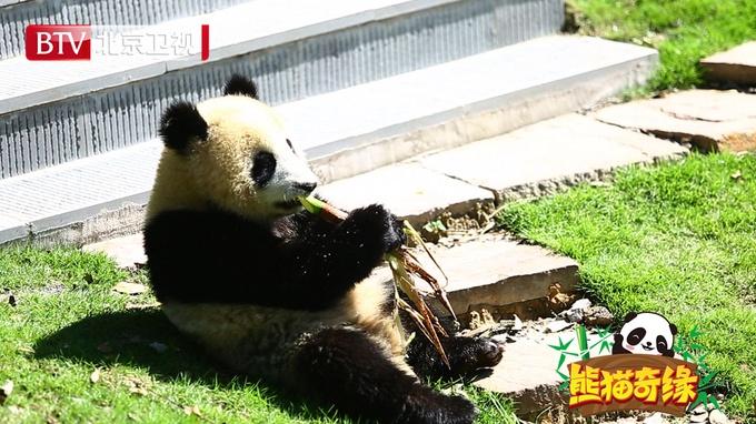 """《熊猫奇缘》""""英雄守护者""""带你涨知识"""