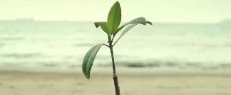 微电影《老人树》:我们都会变老
