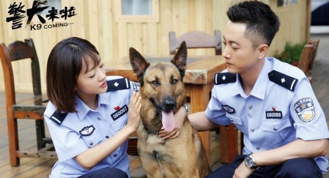 探班电视剧《警犬来啦》杨蓉智斗警犬