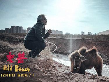 《老兽》定档12月11日 获金马奖四项提名