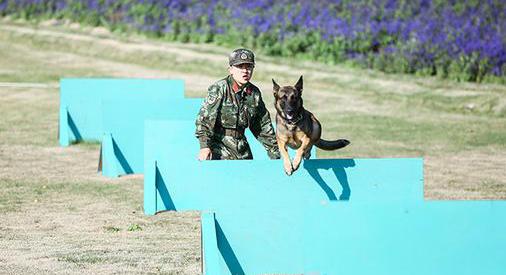 本周《奇兵神犬》迎首次人犬趣味运动会