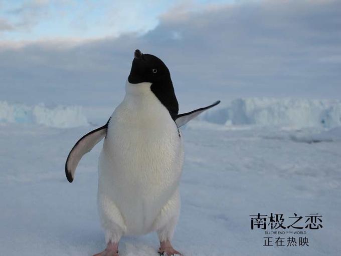 电影《南极之恋》票房破亿强势逆袭