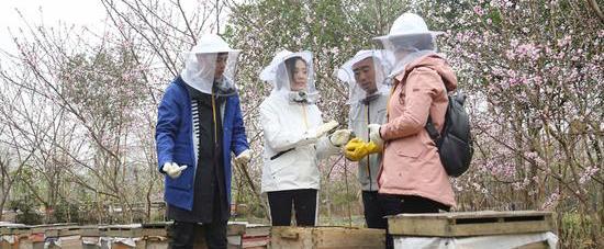 《我们在行动》叶祖新汤晶媚挑战蜂群取蜜