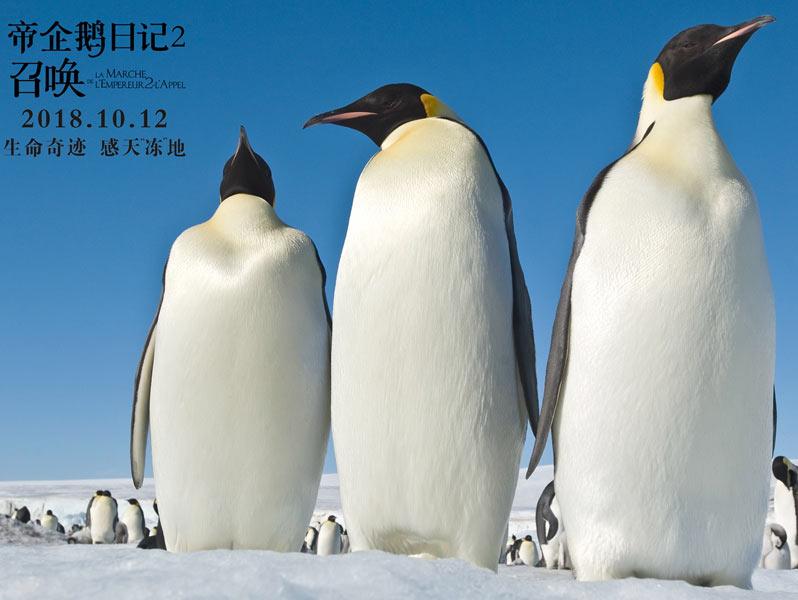 《帝企鹅日记2》震撼回归定档10月12日
