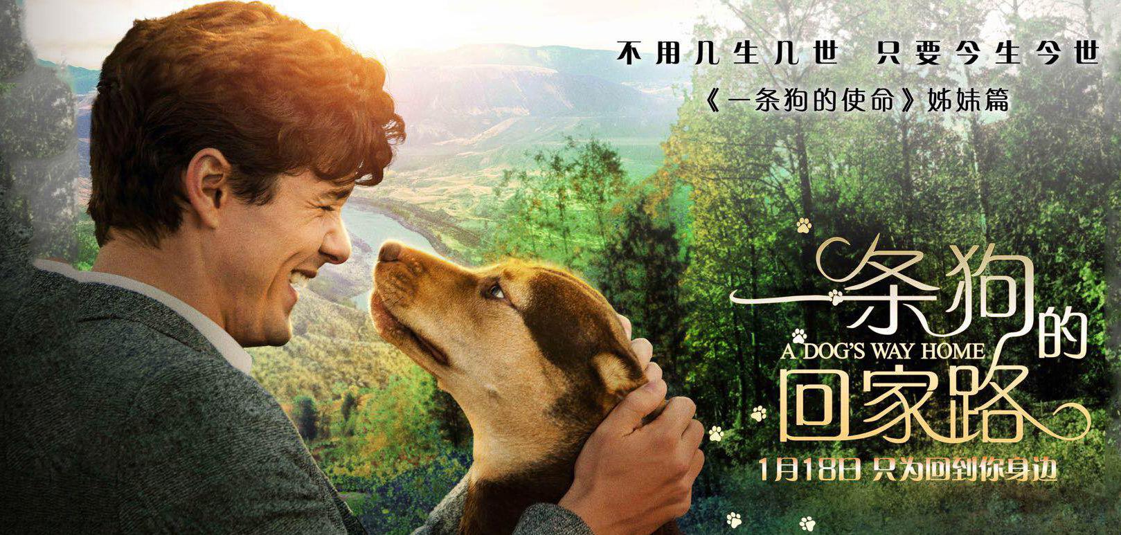 """《一条狗的回家路》终极预告 贝拉激发众网友""""返乡""""动力"""