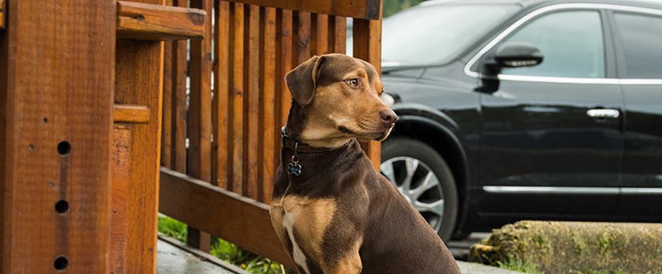 《一条狗的回家路》北美口碑持续走高