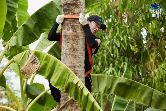 彭昱畅《向往的生活》变爬树专业户