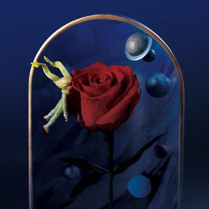 陋室五月个展「星の流浪曲」纪念《小王子》出版75周年